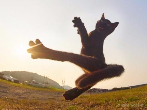 猫 黒猫拳 写真 アクセント