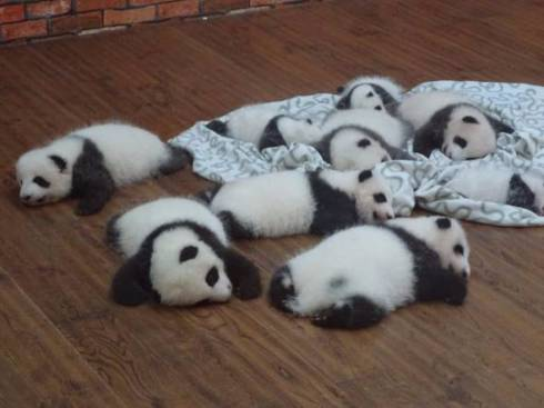 パンダ 赤ちゃん 天国