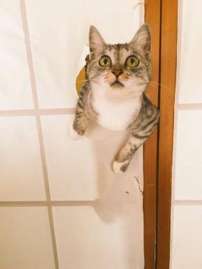 障子破り猫