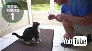 1分間に最も多く芸ができる猫がギネス認定