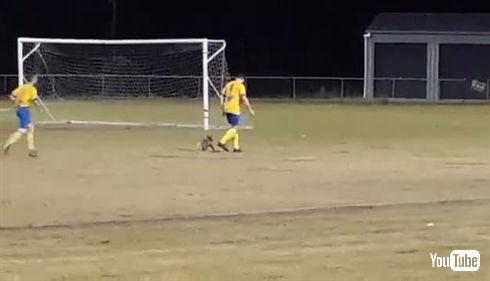 オーストラリアのサッカーの試合中にコアラが乱入