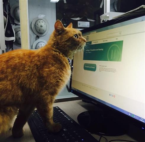 オーストラリアでイケメン猫のお巡りさんが活躍中