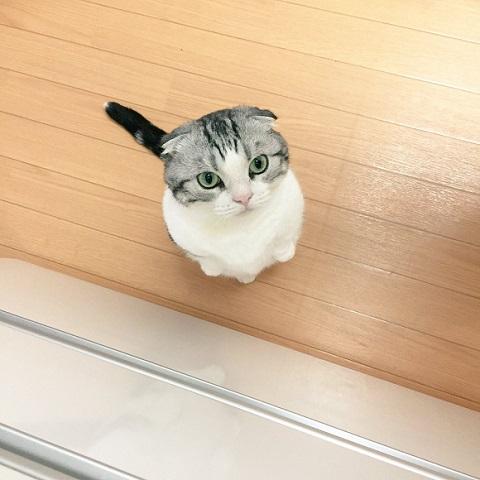 気をつけ猫