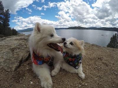 犬 盲目 見えない 盲導犬 2匹 一緒