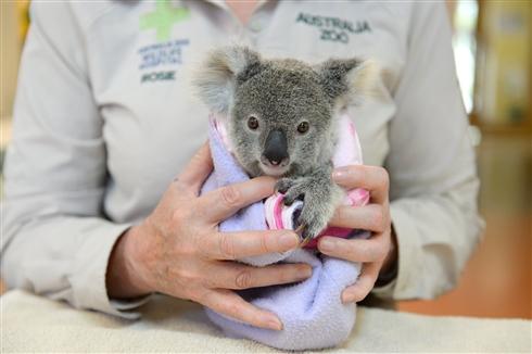 オーストラリアの動物病院「春先の運転では速度落として」