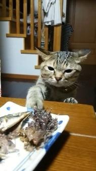 サンマたべたい