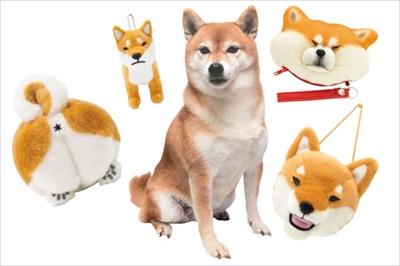 忠犬SHIBA5
