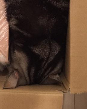 緩衝材 猫 ネコ