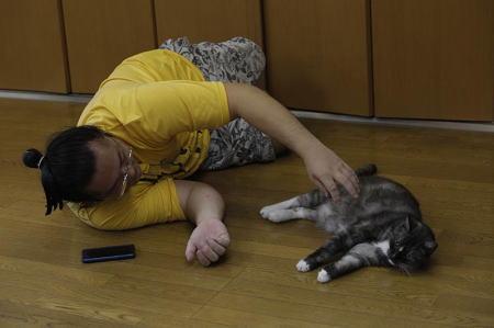 相撲部屋の幸せな猫たち