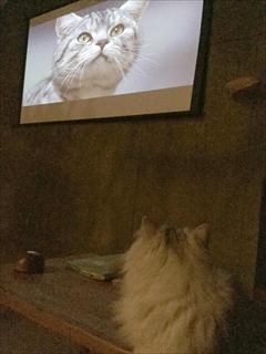 猫の映画上映会