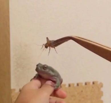 カエル 捕食 失敗 エサ Twitter