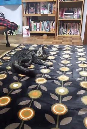 猫 カーペット 動画 動き 反応 かわいい