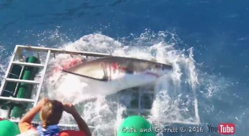 サメがケージに侵入する動画