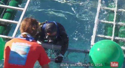 サメが檻に侵入する動画