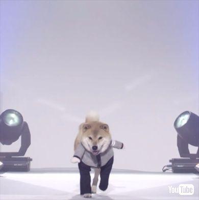 柴犬まるモデル