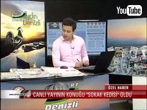 トルコのニュース番組に野良猫乱入。のびのびとくつろぐ