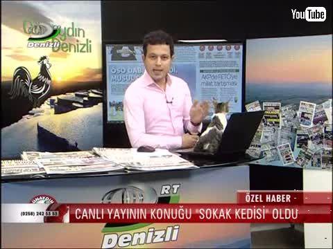「座り心地良さそうなPCじゃニャいですかー!」 トルコのニュース番組に猫が乱入 のびのびとくつろぐ