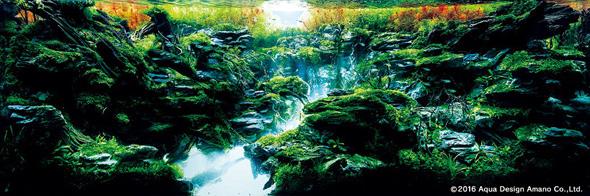 世界水草レイアウトコンテスト アクアデザインアマノ 水槽 水草 2016 受賞作品