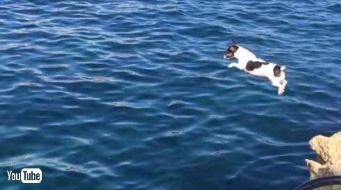 犬 ダイブ 飛び込み マルタ ティッティ Titti