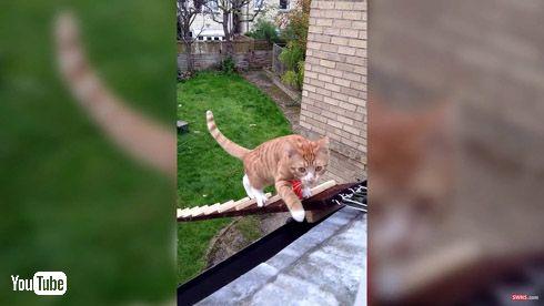 猫 はしご 階段 2階 出入り