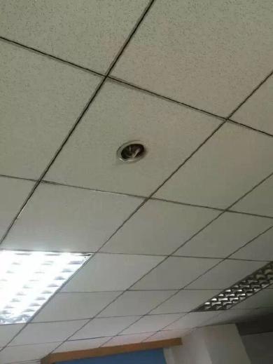 監視カメラから顔を出すネコ