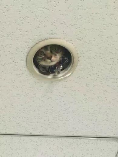 監視中のネコ