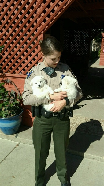 アメリカで住居不法侵入事件が発生 地元警察が容疑者2匹のモフかわいい写真を公開