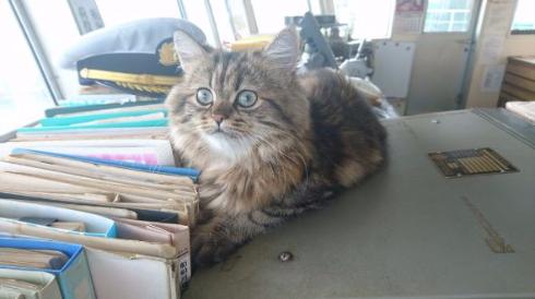 カンパチ 船長 ベスト内航船員賞 受賞 チンチラ Twitter うどん 猫