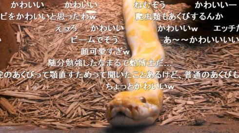 ニシキヘビのあくび