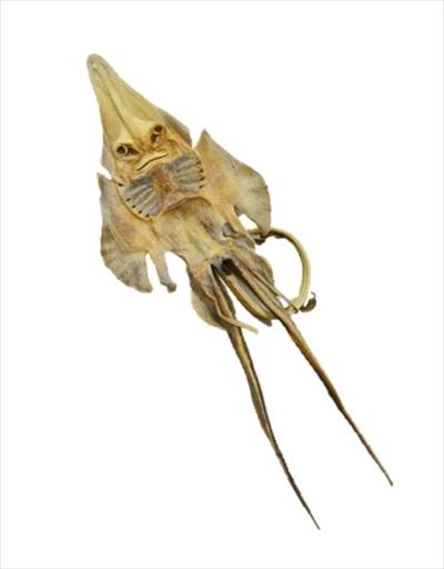 サンシャイン水族館福袋