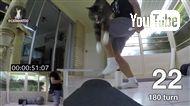 1分間に最も多く芸ができるギネス猫が自己記録を更新