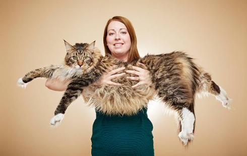 世界で一番長い飼い猫