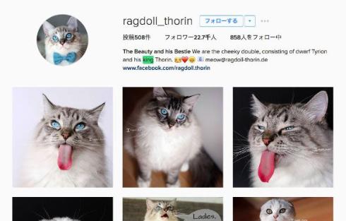 舌が長い猫のInstagram