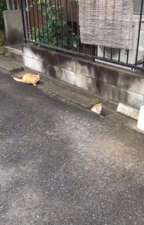 猫 追いかけっこ 溝 2匹 Twitter