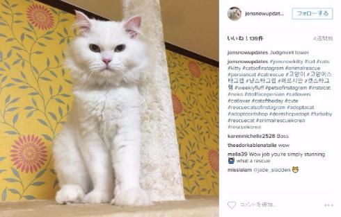 猫 ボロボロ もふもふ 保健所 回復 ジョン・スノー レイチェル・ブラウン