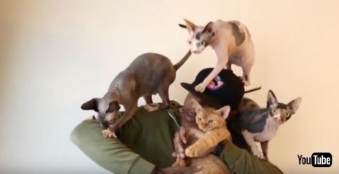 猫ラッパーMoshow