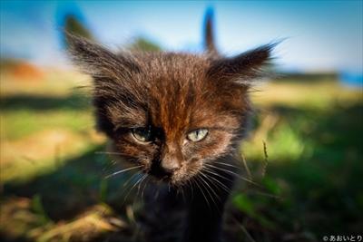 あおいとり・気ままに猫だもん