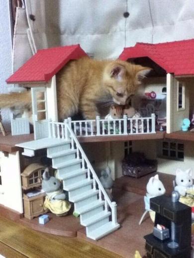 猫 進撃 巨猫 シルバニアファミリー ころん