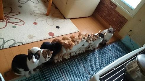 猫ストーブ