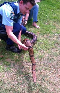 子犬を飲み込んだ疑いのヘビを確保 飼い主も絞め殺されかけ