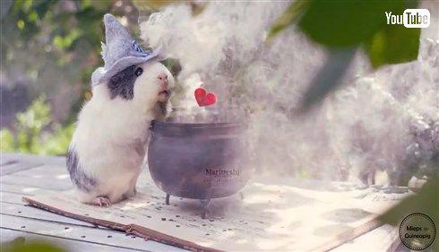 メルヘンかわいいモルモットのミープスちゃん