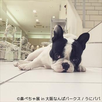 鼻ぺちゃ展&巻きしっぽ展