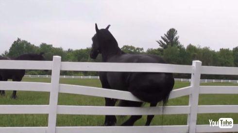 馬 お尻 かゆい 柵 掻く 牧場 破壊