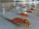 北九州・スペースワールド5000匹の魚を氷漬けにしたアイスリンクに非難の声 公式FBには残虐な表現も