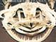 司書メイドの同人誌レビューノート:ぞわり! 魚の骨格標本を集めた写真集「魚骨 UO BONE」のリアルさに思わず鳥肌