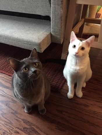 ツリーと猫