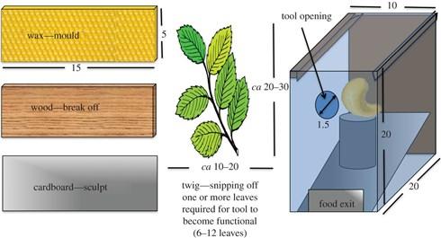 最新の研究でオウムが道具を自作できることが判明