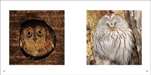 鳥の正面顔