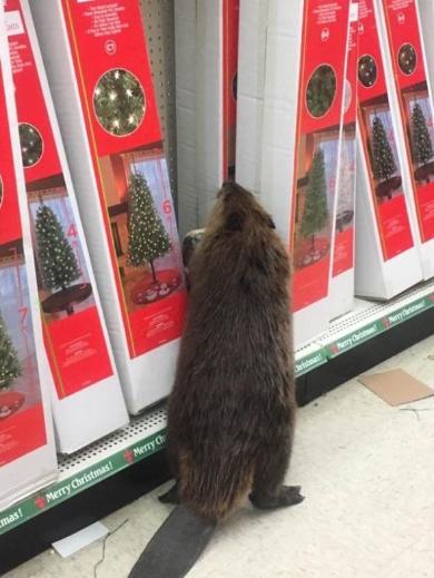 どのクリスマスツリーにしようかな