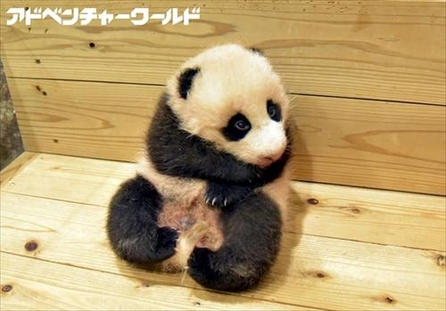 名前は 結浜 ゆいひん 和歌山アドベンチャーワールドのパンダの